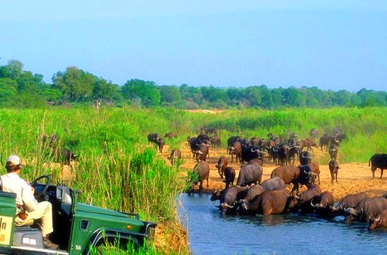 克鲁格国家公园是南非最大的野生动物园