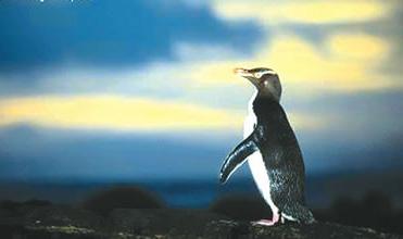 可爱的企鹅ppt